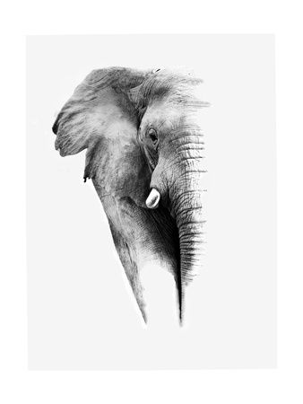 Artistic Black And White Elephant Kunsttryk