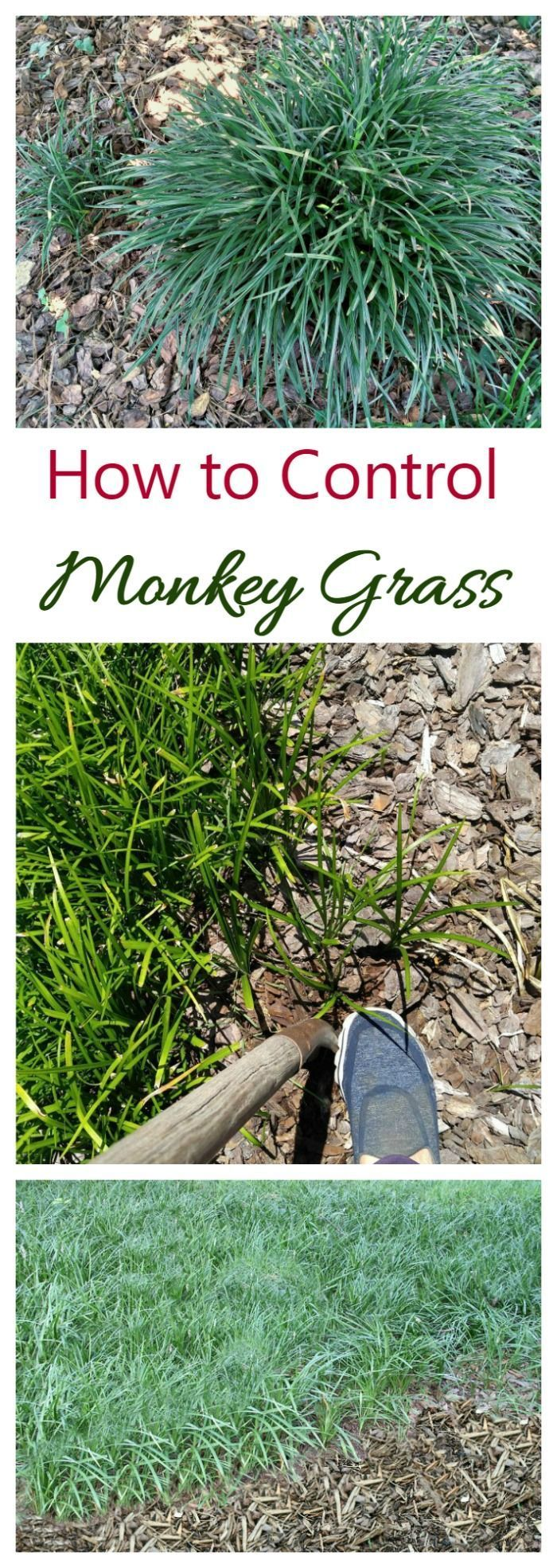 how to get rid of ground cover in grass