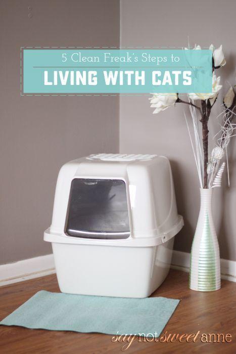 5 Steps To Living With A Litter Box Cat Litter Odor Best Cat