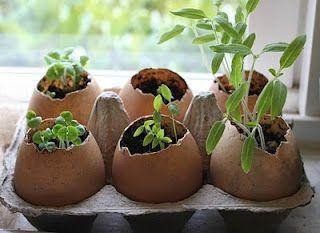 egg shell planter