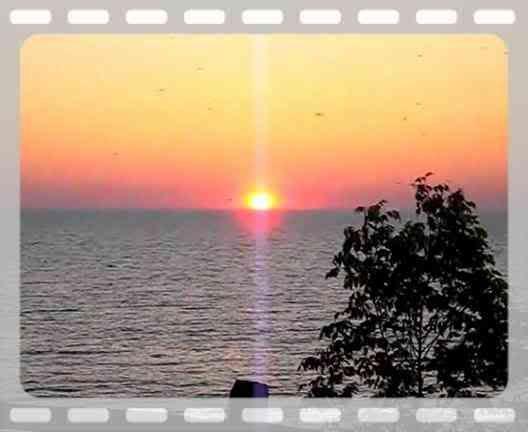 MovieMidges.mp4 video by GloBaum