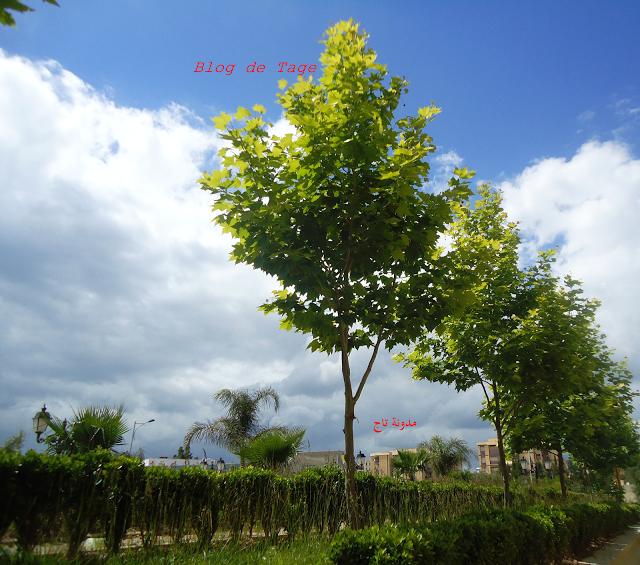 أشجار بلاتان وغيوم Plants Fruit Tree