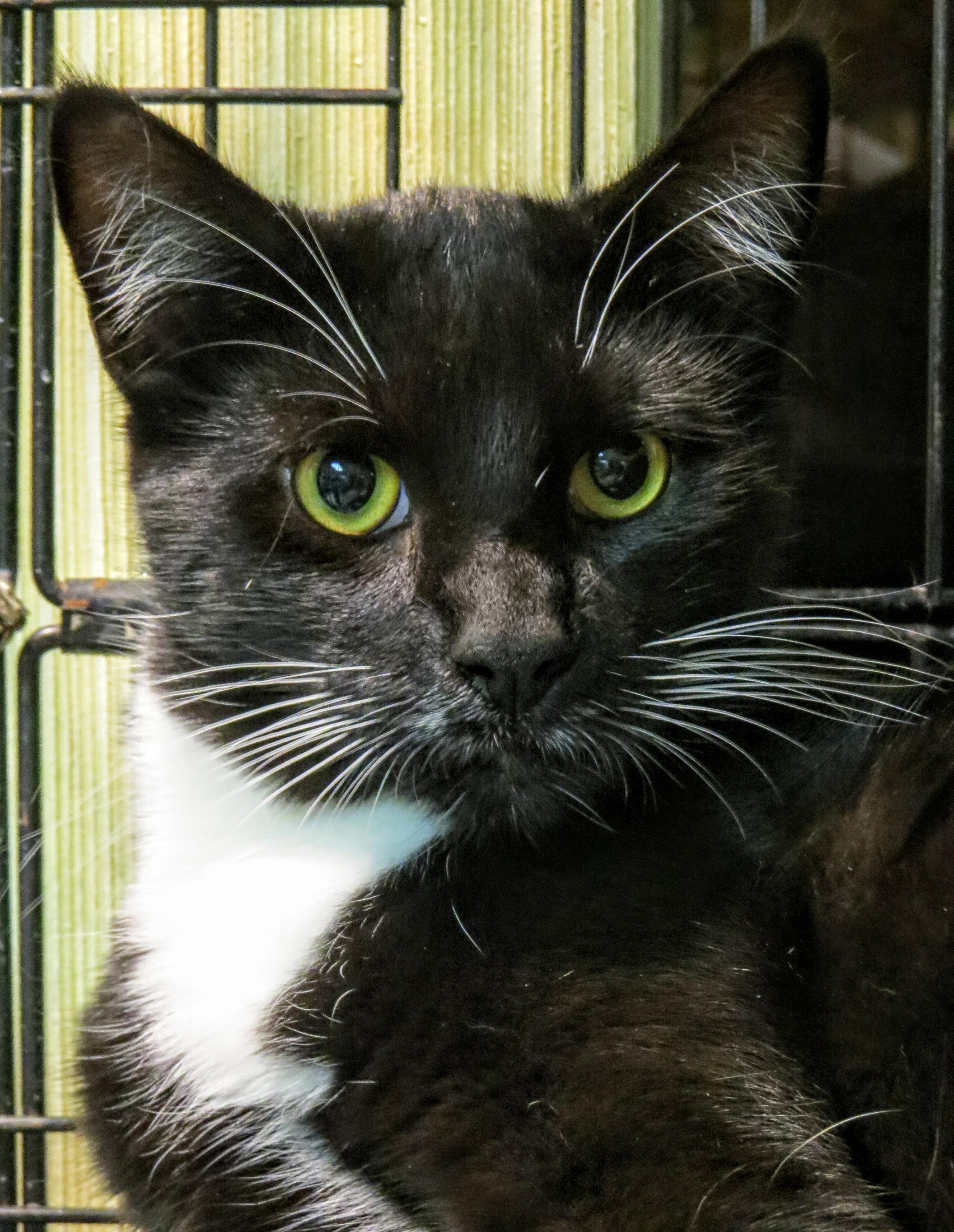 """Adopt 5415 """"Charming"""" on Animal shelter shirt, Kitten"""