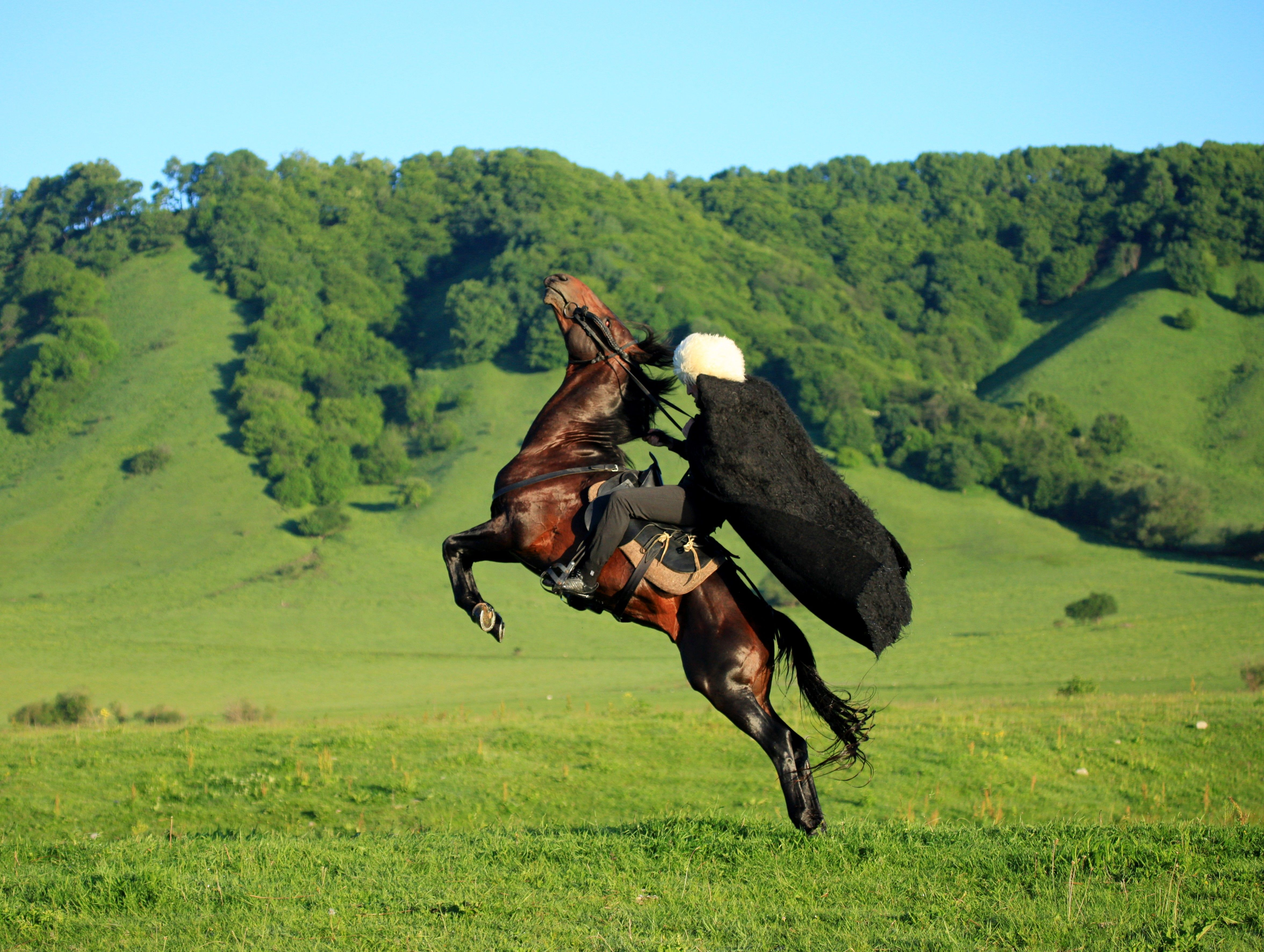 конструкции картинки джигитов на коне моменте кастинга