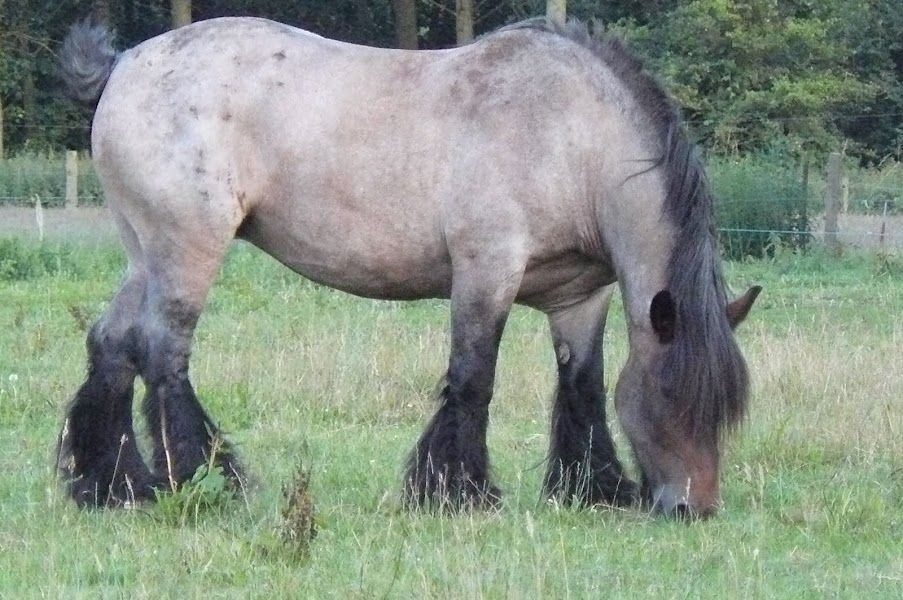 The neighbours' horse