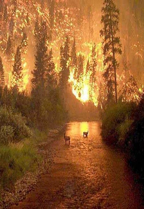 Risultati immagini per foreste incendiate