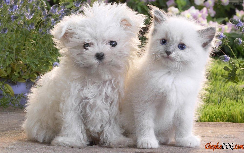 All About Dogs And Dog Breeds Dog Breeds Info With Pictures And Photos Cute Puppies And Kittens Cute Cats And Dogs Cute Baby Animals