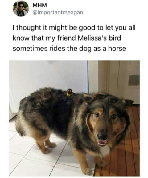 Pin By Alex K On Hilarity Ensues Funny Dog Memes Funny Animal Pictures Funny Animals