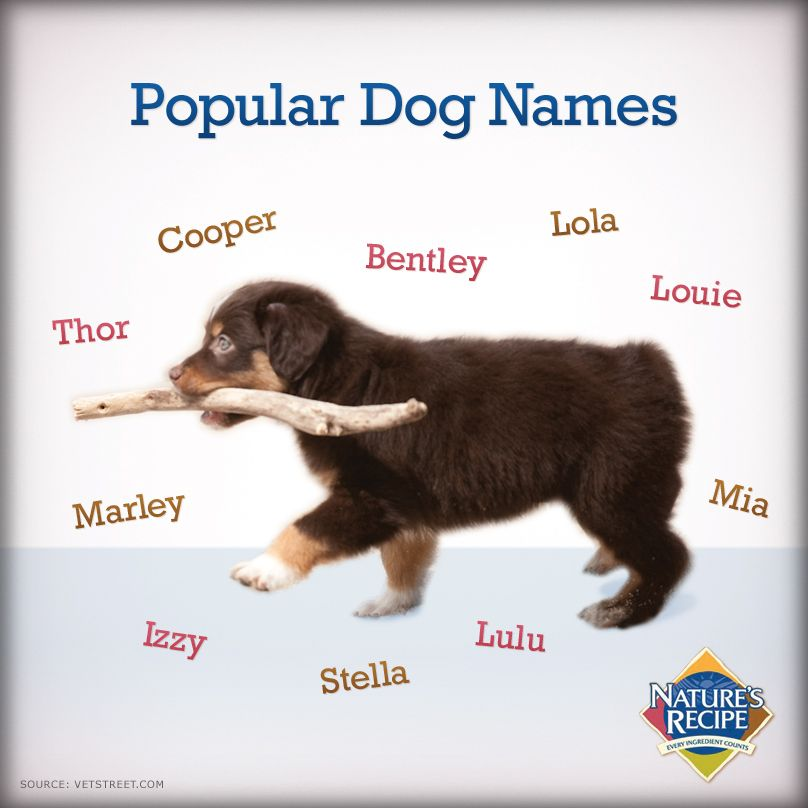 Best Pet Names For Girlfriend: Trying To Pick A Name For Your New Puppy? Here Are 10 Of