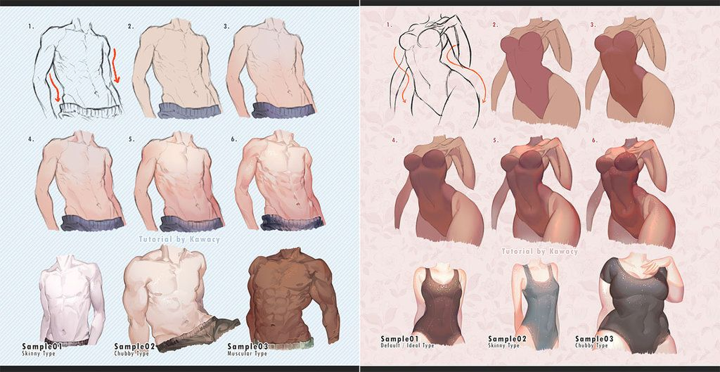 Male vs Female Body by kawacy on DeviantArt | Drawing/Painting ...