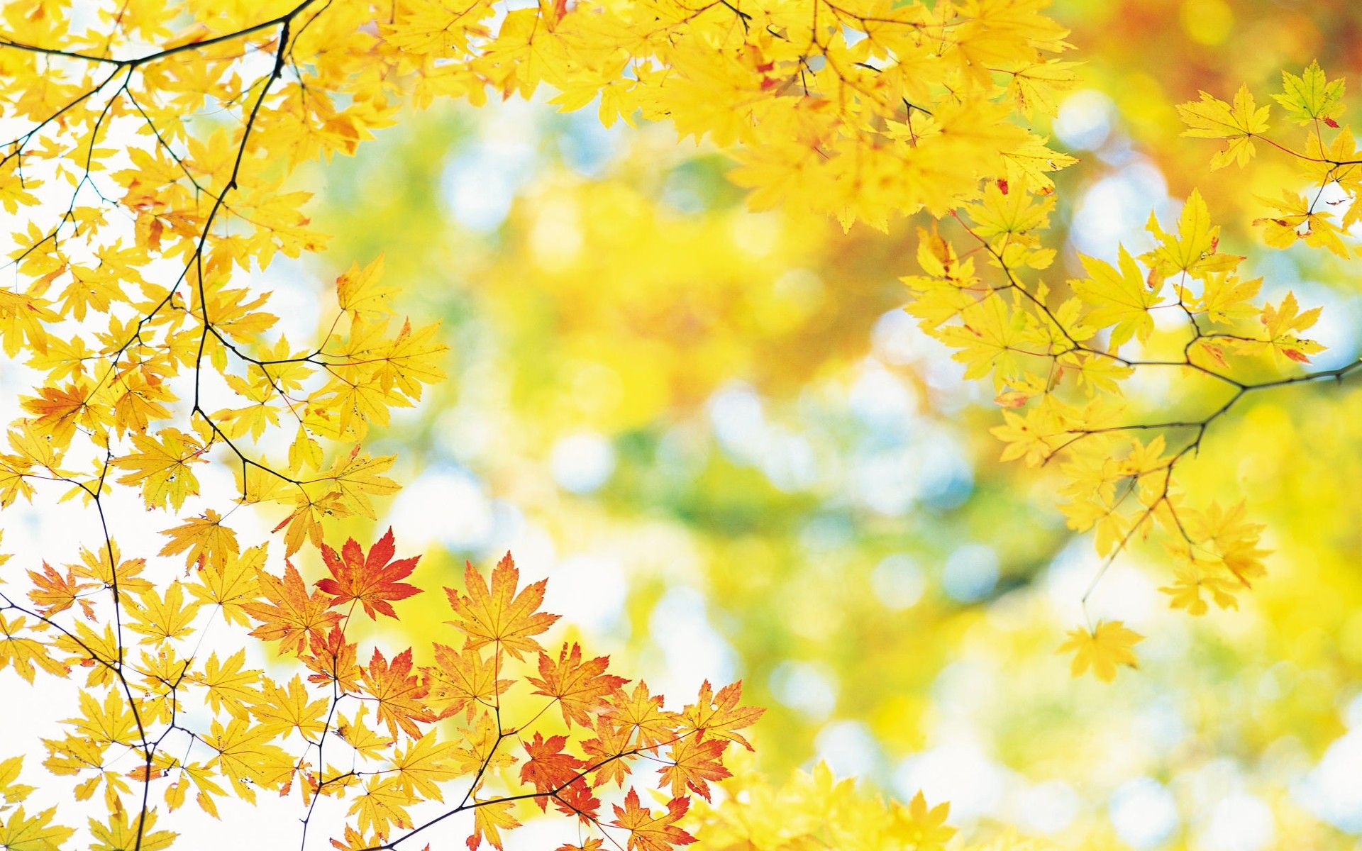 Yellow Nature Wallpapers Studio S Kleuren Creativiteit
