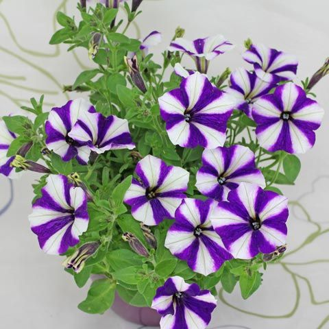 Pflanzenbestimmung zimmerpflanzen garten balkon for Pflanzen laden berlin