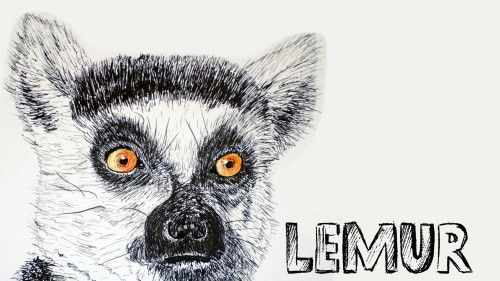 How to draw a Lemur Portrait in Pen and Ink - Online Art Lessons