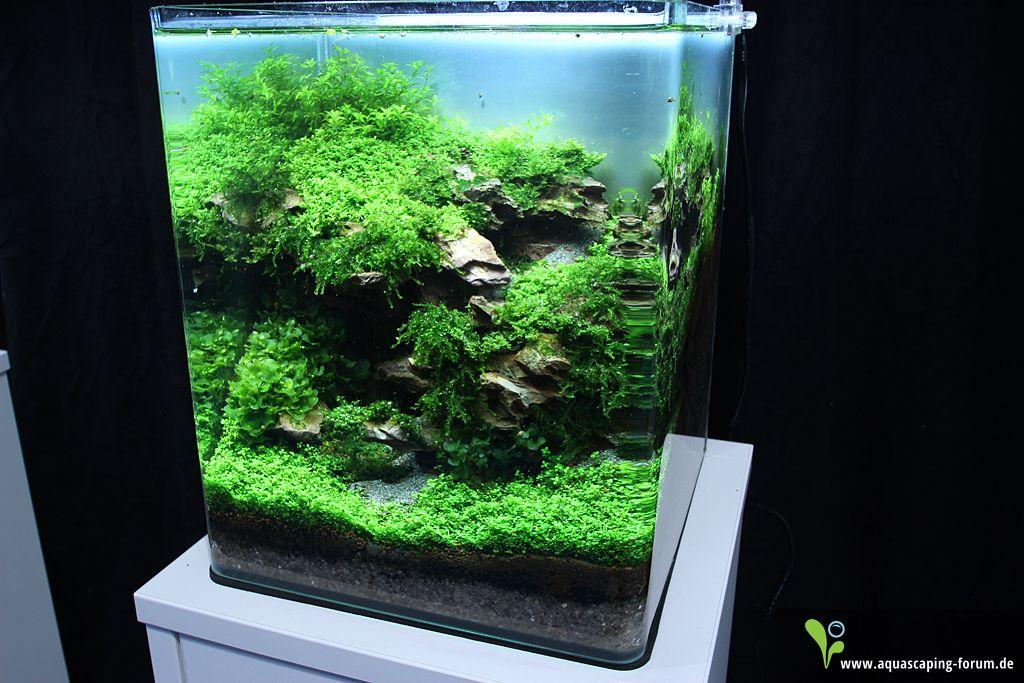 The art of the planted aquarium 2013 nano aquariums for Plante nano aquarium