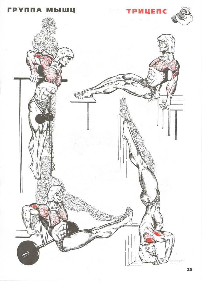 Картинки упражнения для мускулатуры в картинках