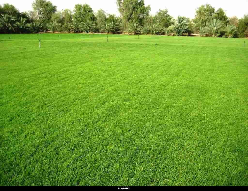 Want to make your lawn spring back after winter? Lawn
