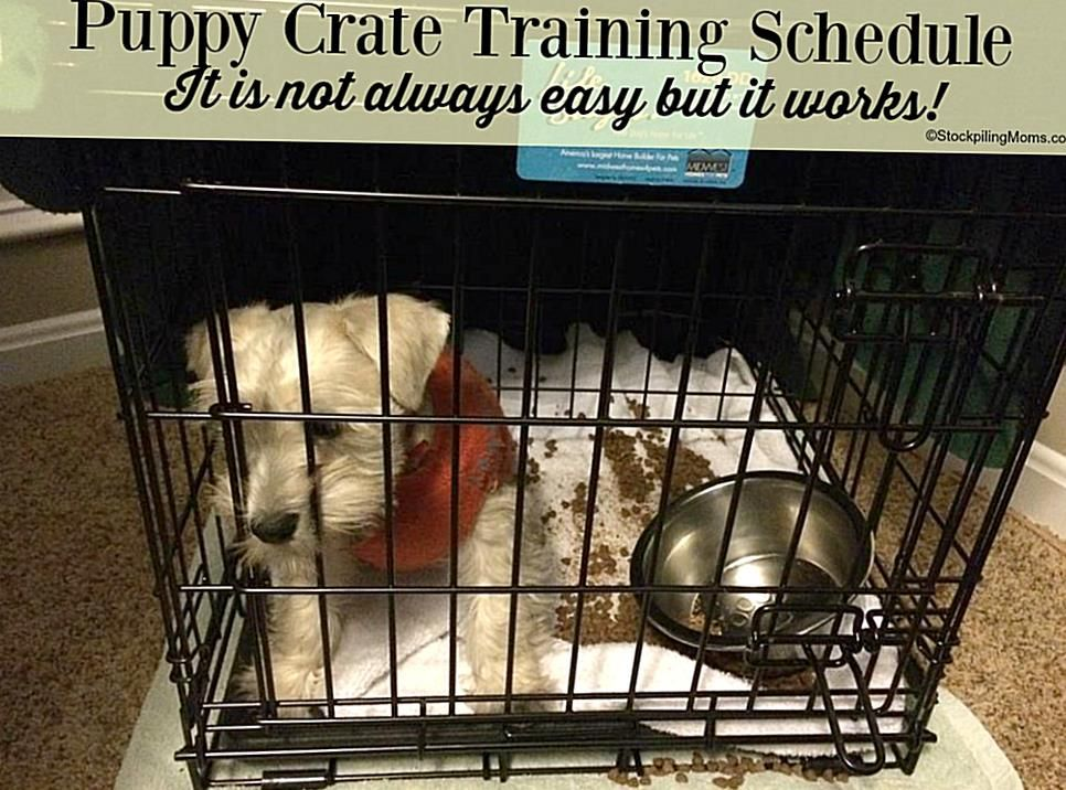 Puppy Crate Training Schedule In 2020 Crate Training Puppy Crate Training Puppy Schedule Dog Training Obedience