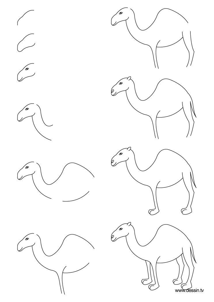 Dessin chameau dessine moi un mouton pinterest - Dessiner un chameau ...