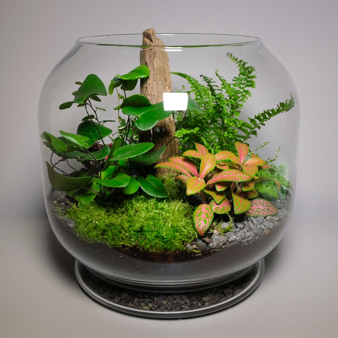 Open Terrarium Filled With Plants Fern Moss And Wood Open