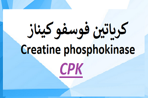 كرياتين فوسفو کیناز Creatine Phosphokinase Cpk Creatine Cpk