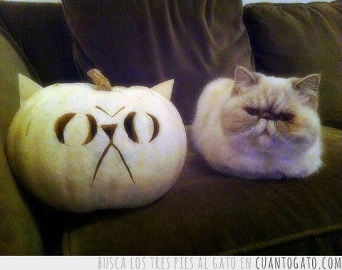 No me hace gracia ese gato #ImagenDelDia
