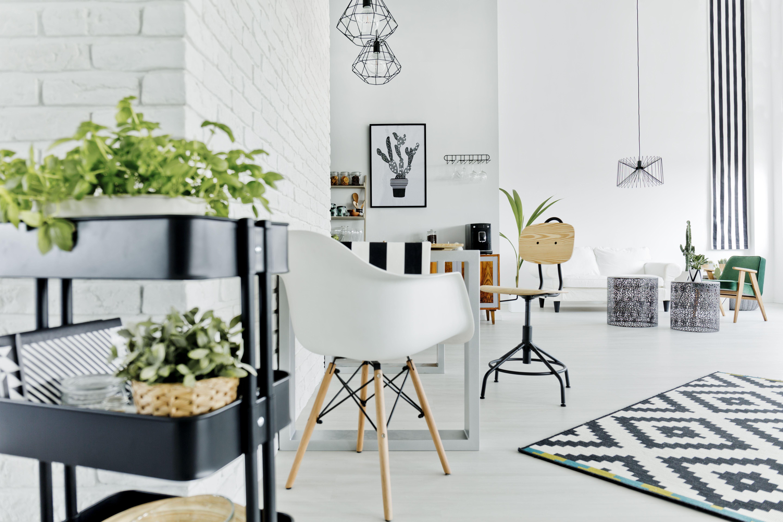 Las plantas llenan de aire purificado tu espacio