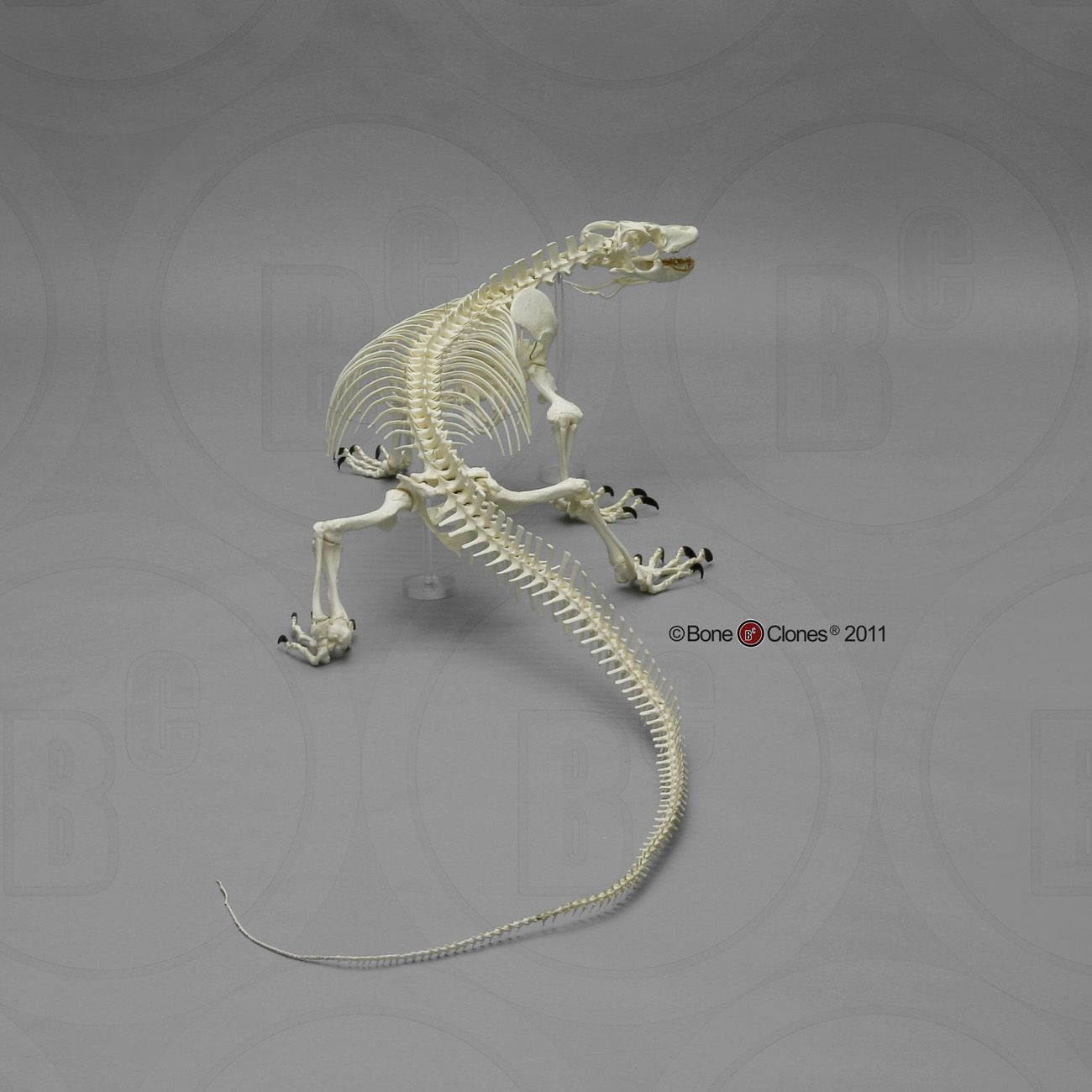 sc-027-a-d-Logo.jpg 1,300×1,300 pixels | lizards | Pinterest ...