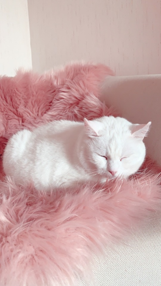 Lovely Cat Iphone Wallpaper Pink Melody Girly 2021 Live Wallpaper Hd Wallpaper Iphone Cute Pink Wallpaper Iphone Cute Wallpapers