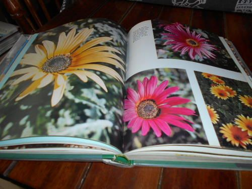 Home & Garden - UNA VAN DER SPUY - WILD FLOWERS OF SOUTH AFRICA FOR THE GARDEN - READERS DIGEST 1976 illus HARDB for sale in Napier (ID:194937149)