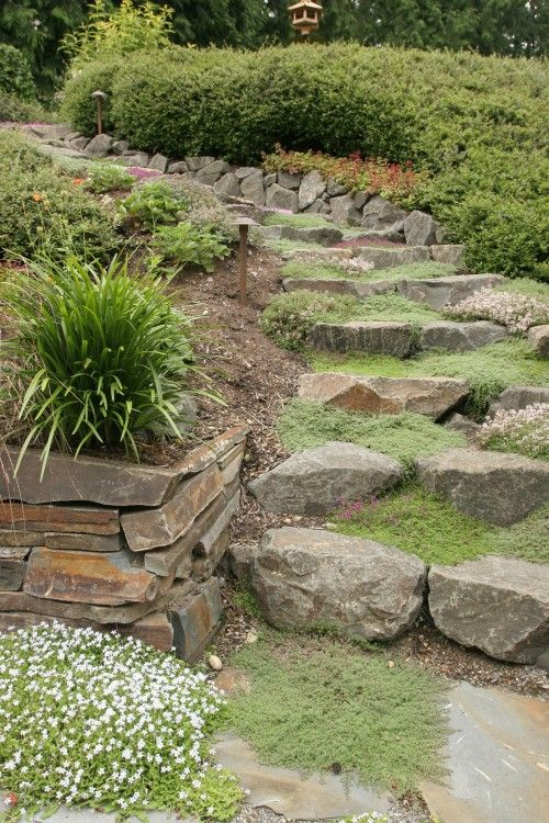 Natural stone steps with creeping thyme ground cover for Landscaping rocks you can walk on
