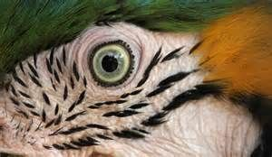 animal close ups - Yahoo Search Results Yahoo Image Search results