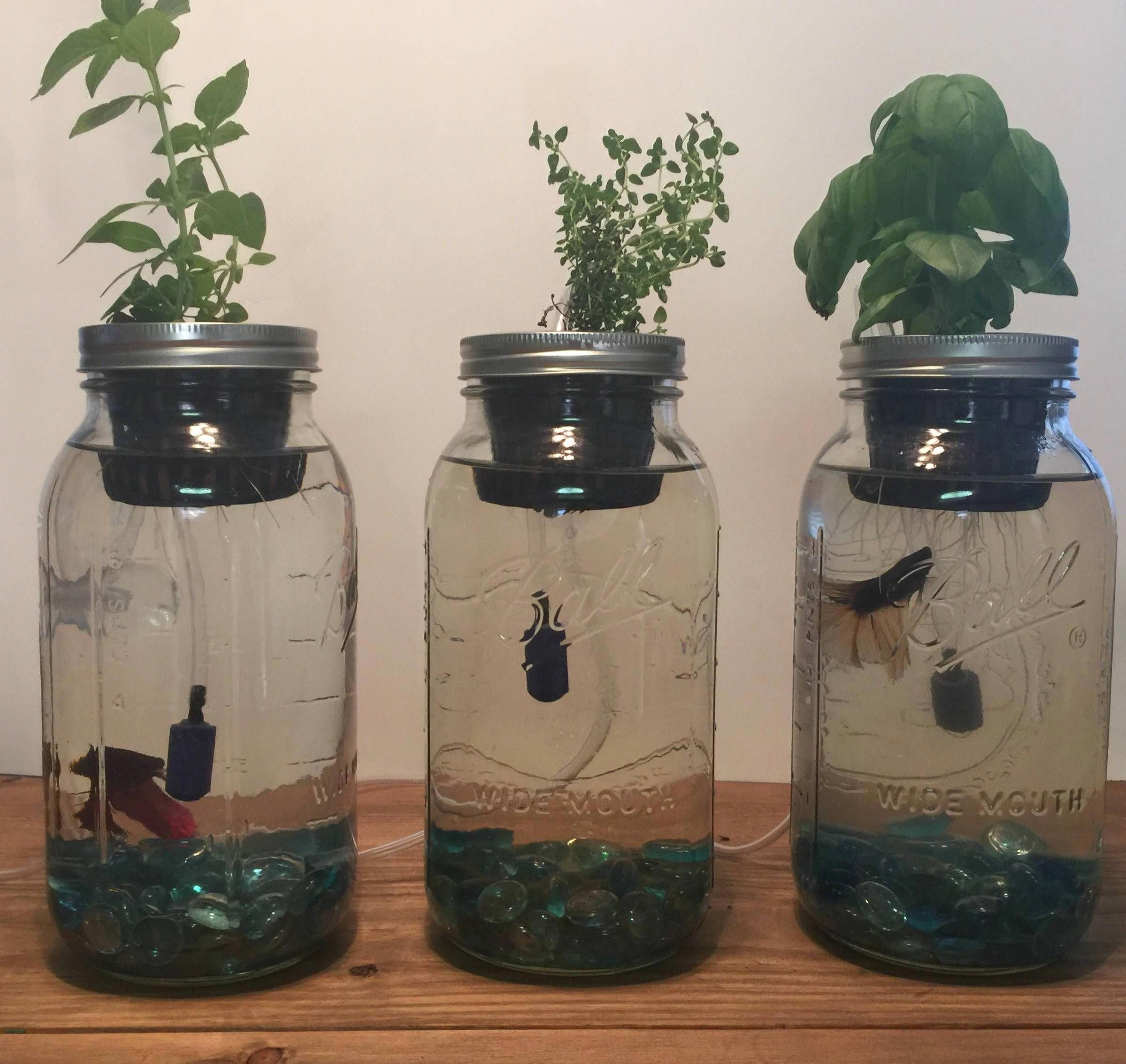 Build your own indoor herb garden with this mason jar