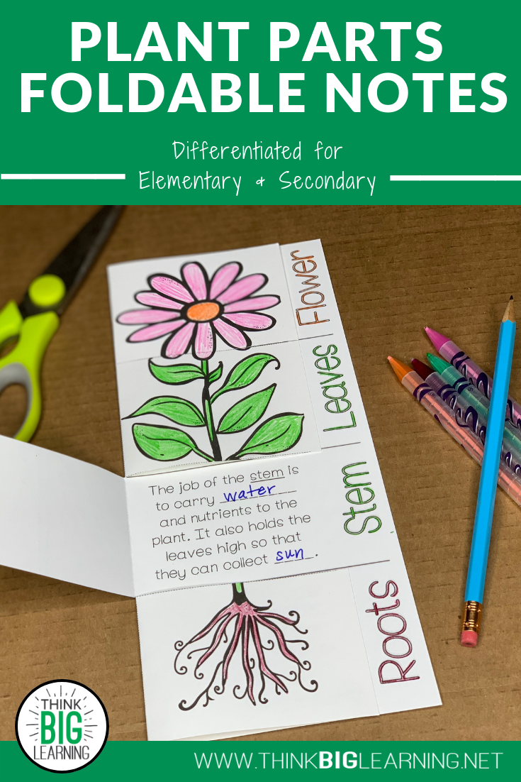 Plant Parts Foldable Notes Diagram and Functions Sort