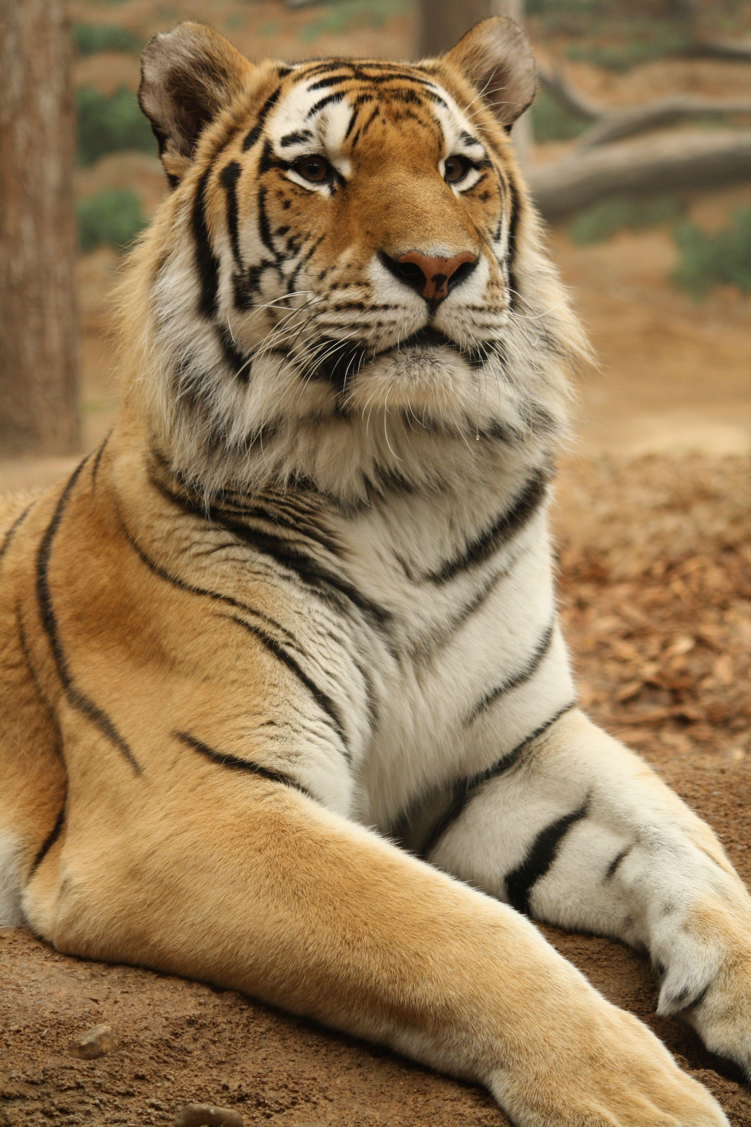 12+ Go diego go fiercest animals images