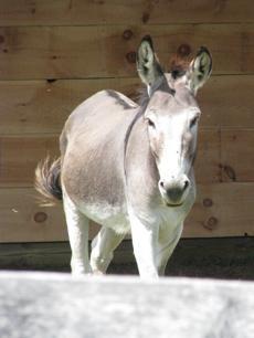 My sponsored donkey! GREAT CAUSE! Don Quixote | The Donkey Sanctuary