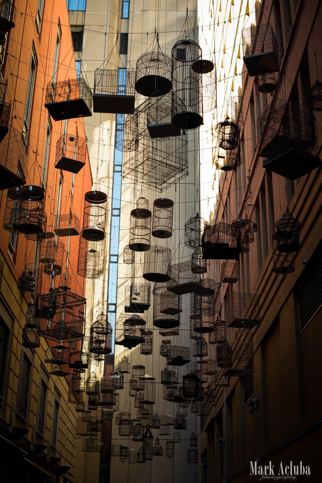 Alley way full of Bird Cages in Sydney, Australia