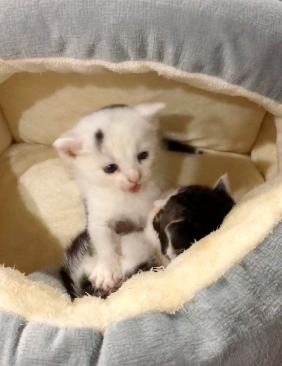 Kittens Found Crying On Loading Dock Get Much Needed Help And Comfort Love Meow Kittens Cat Mom Cute Animals