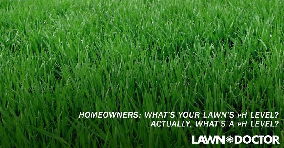 pH Balancing Grass clippings