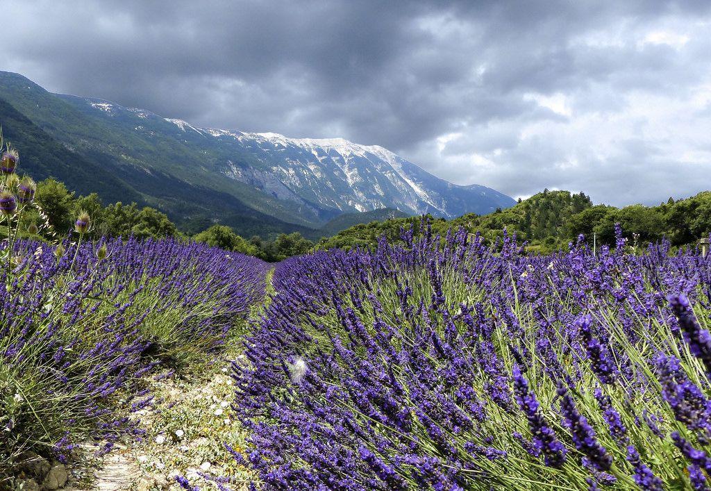 Le mont Ventoux est un sommet français culminant à 1 911 mètres. Il fait environ 25 kilomètres de long sur un axe est-ouest pour 15 kilomètres de large sur un axe nord-sud. Surnommé le Géant de Provence ou le mont Chauve, il est le point culminant des monts de Vaucluse et le plus haut sommet de Vaucluse. Son isolement géographique le rend visible sur de grandes distances Sa nature essentiellement calcaire est responsable de sa vive couleur blanche et d'une intense karstification due à…
