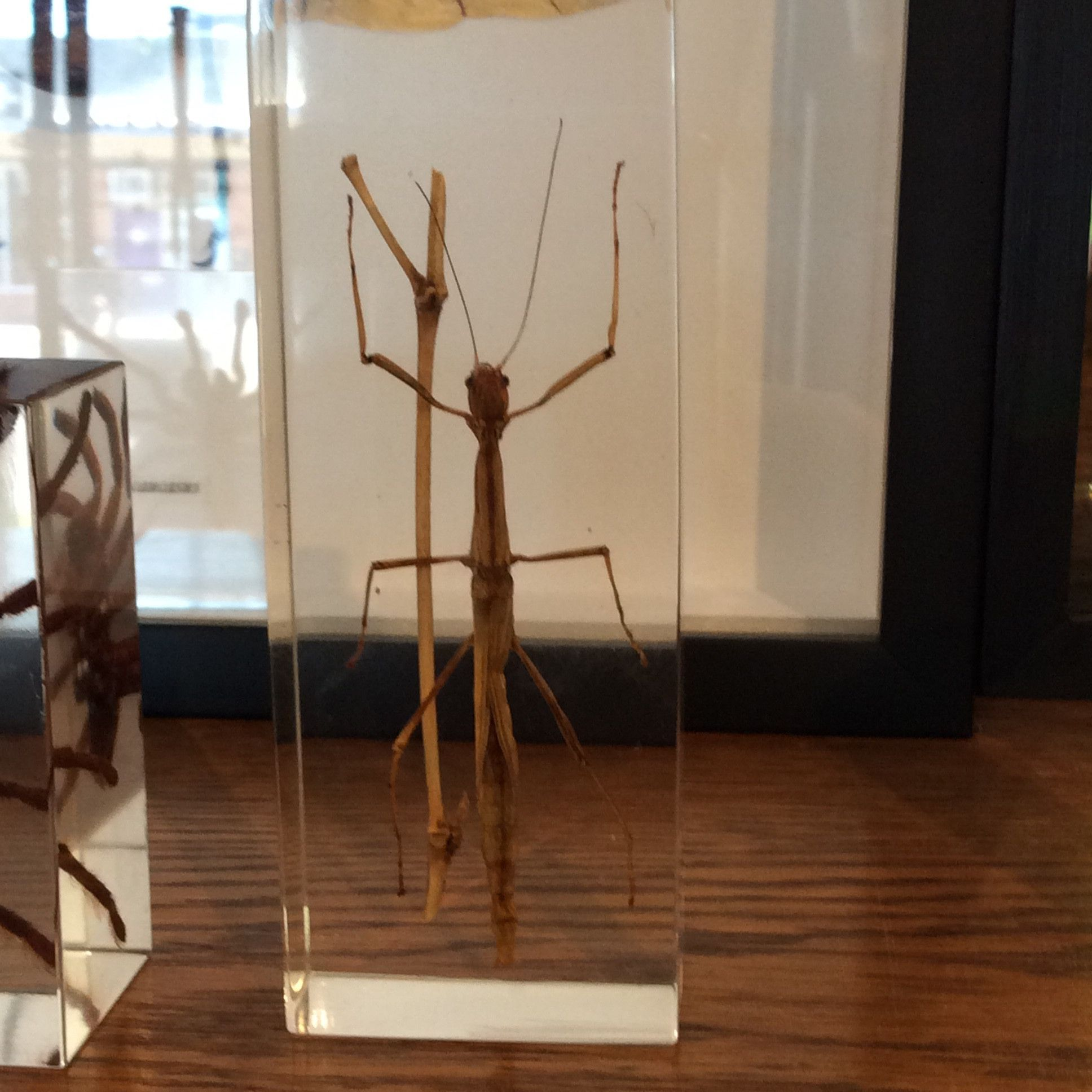 Walking Stick Paperweight