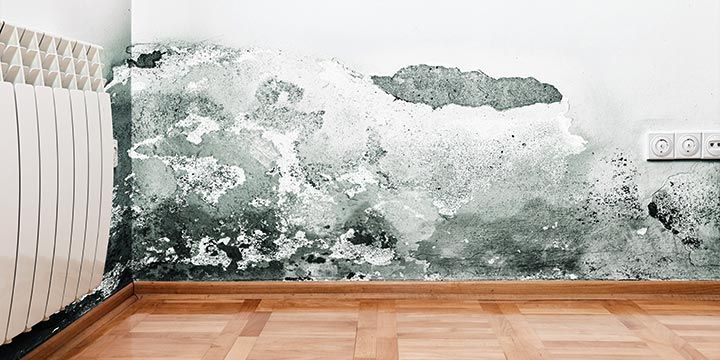 Mold Growth Can Be A Huge Problem For Any Homeowner If You Have In Your House Don T Let It Take Over Click Here Four Ways To Remove