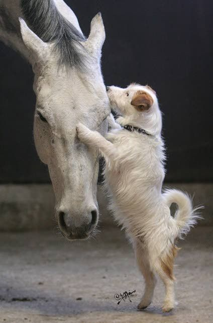 Sharing A Secret Animals Beautiful Horses Dogs Cute Animals