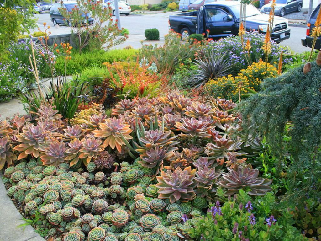 Tips For Growing Succulents Outdoors Succulent Outdoor