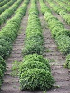 Start A Backyard Nursery Business Young Plants Growing
