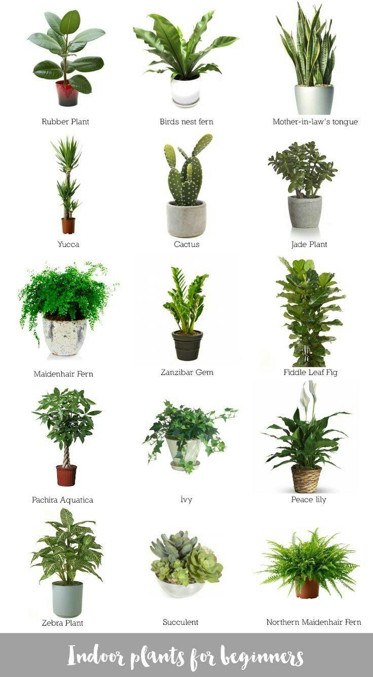 inspiration house plants that repel bugs. Discover recipes  home ideas style inspiration and other to try Pin by Reem on House plant Pinterest Plants Gardens Green