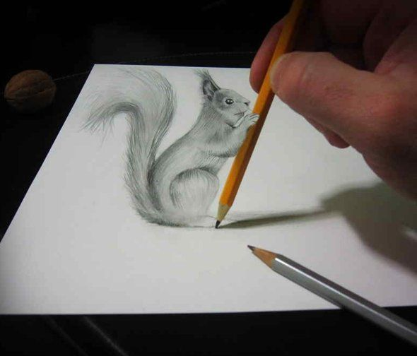 3 d squrrel pencil drawing
