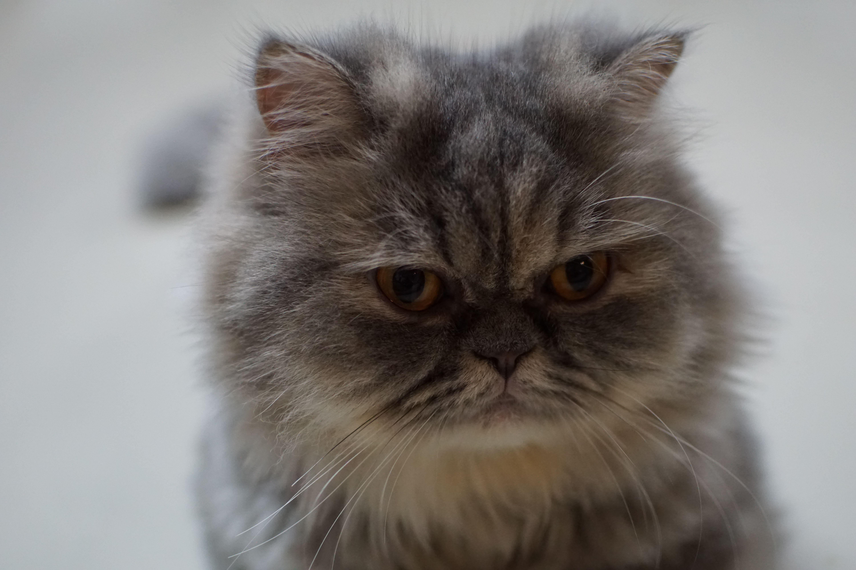 ป กพ นโดย Rebecca Pittman ใน My Cats