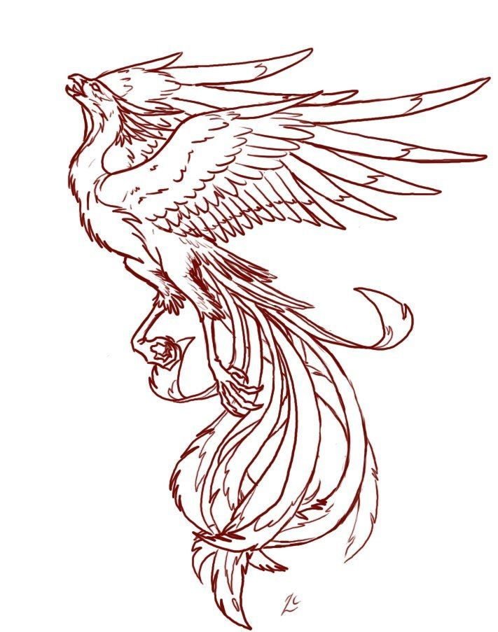 LKgU2V_6puo.jpg (711×903) | Tattoo | Pinterest | Fénix, Tatuajes y ...