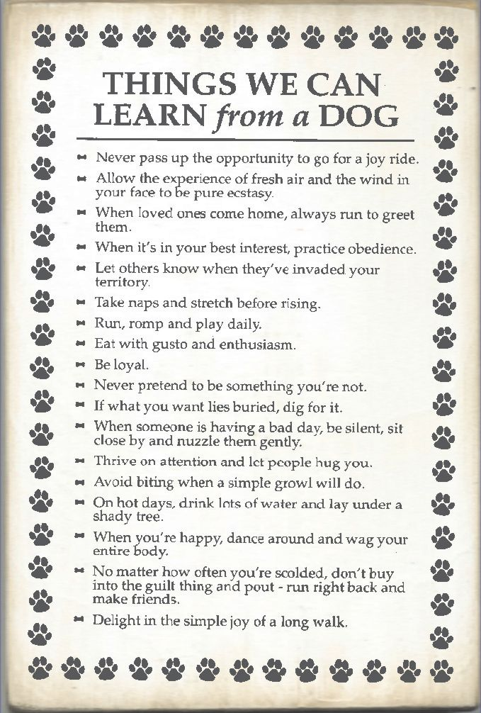 THINGS WE CAN LEARN From A DOG Poster. I Would Put This On