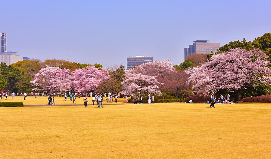 Most Beautiful Spots To See The Cherry Blossoms In Tokyo Tokyo Japan Travel Beautiful Spots Japan Travel